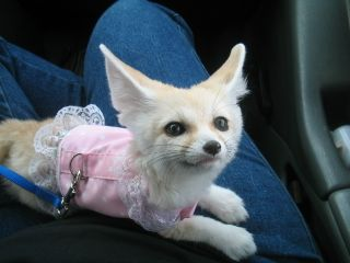 Fennec=fox