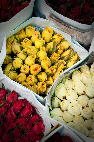 Roses_red_yellow_white