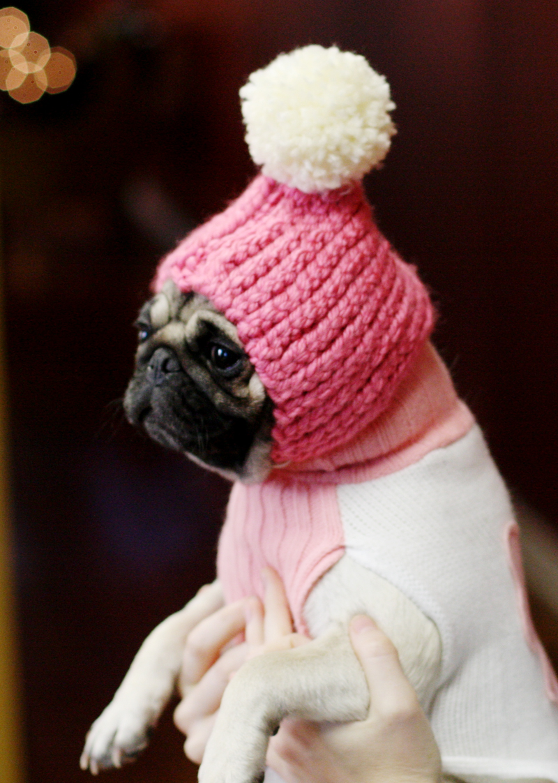 Dog-hat-2