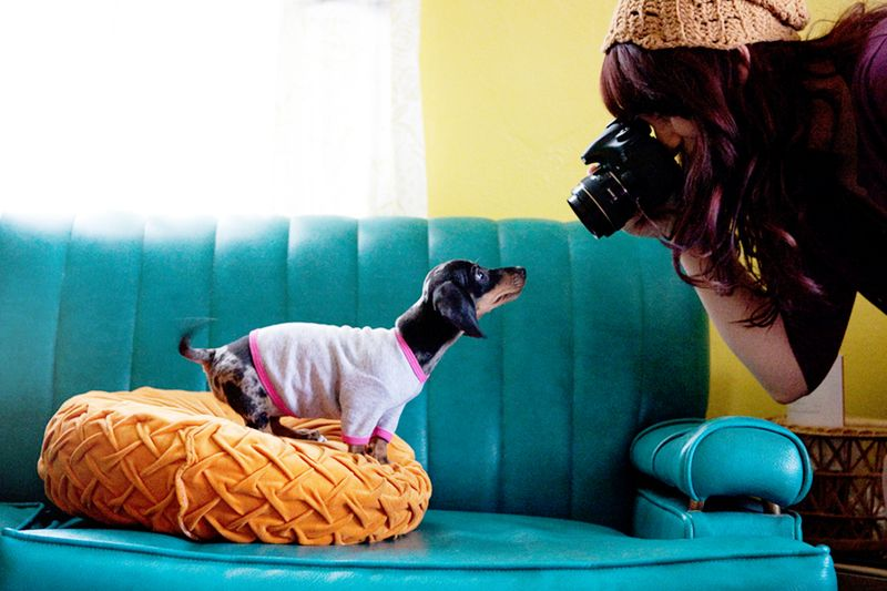 Tips for pet photography