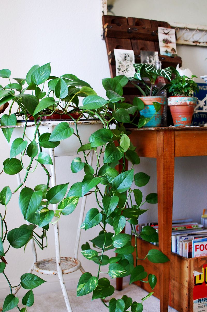 5 tips for adding green to your home a beautiful mess - Plants for the house ...