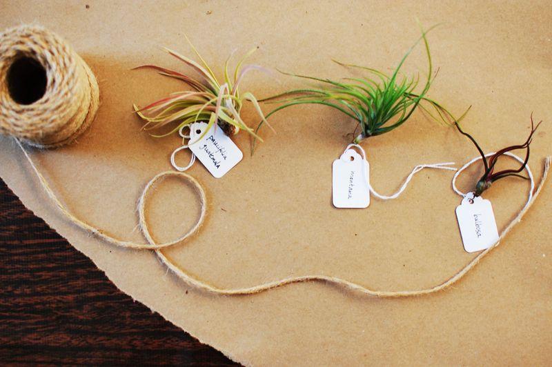 2   air plants