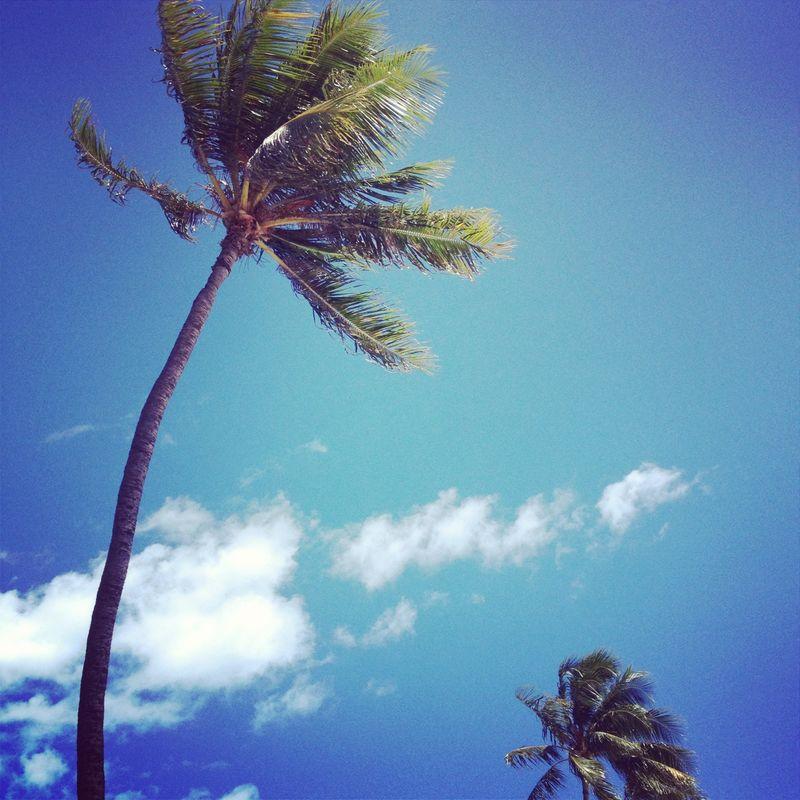 Insta Hawaii on A Beautiful Mess 1
