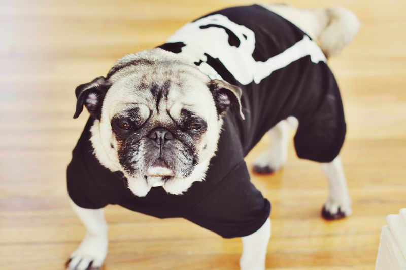 Grumpy Skeleton Suki
