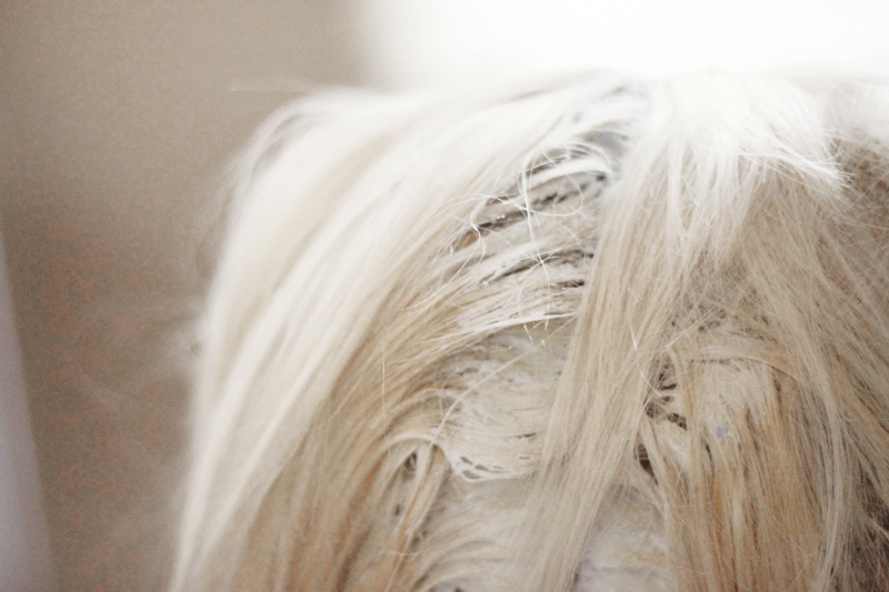 Platinum hair_roots