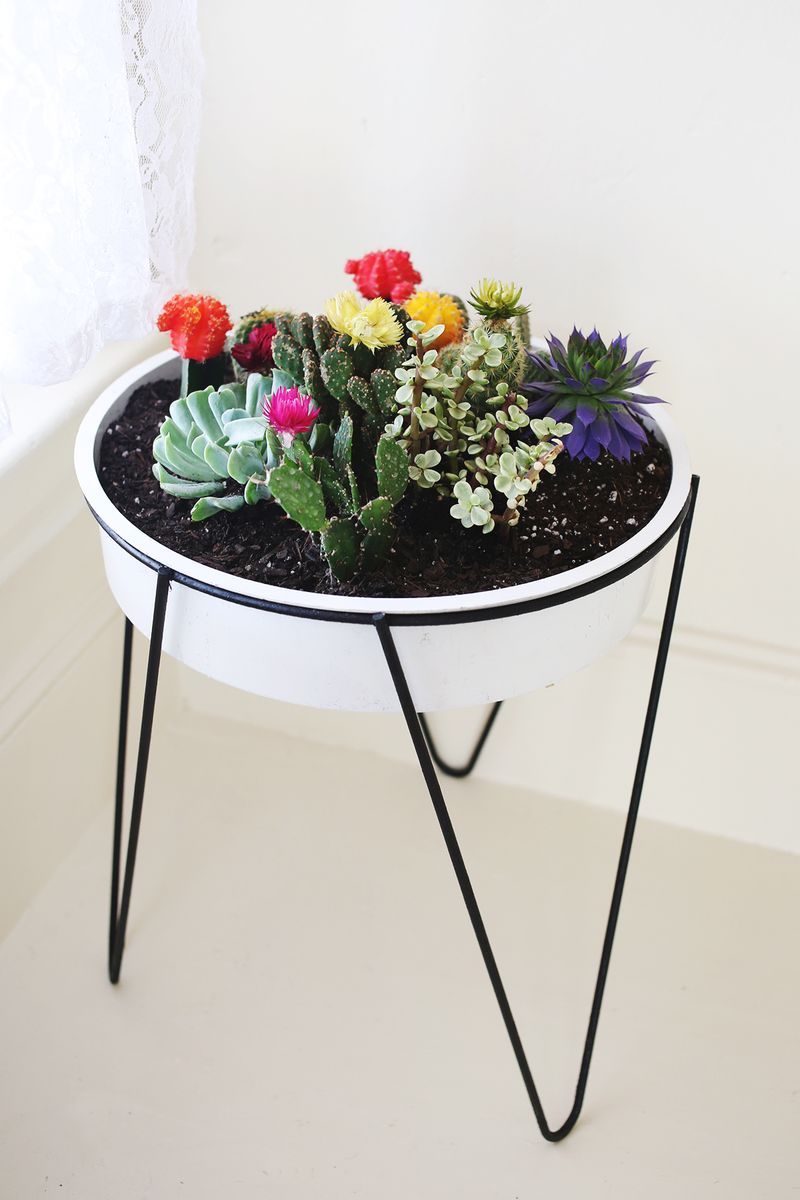 a vintage planter cacti garden a beautiful mess. Black Bedroom Furniture Sets. Home Design Ideas