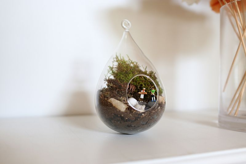 Lovely terrarium