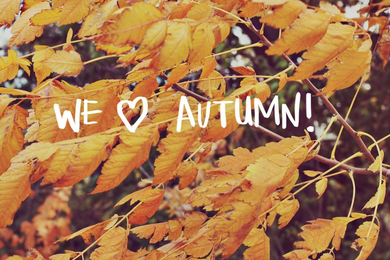 We Love Autumn