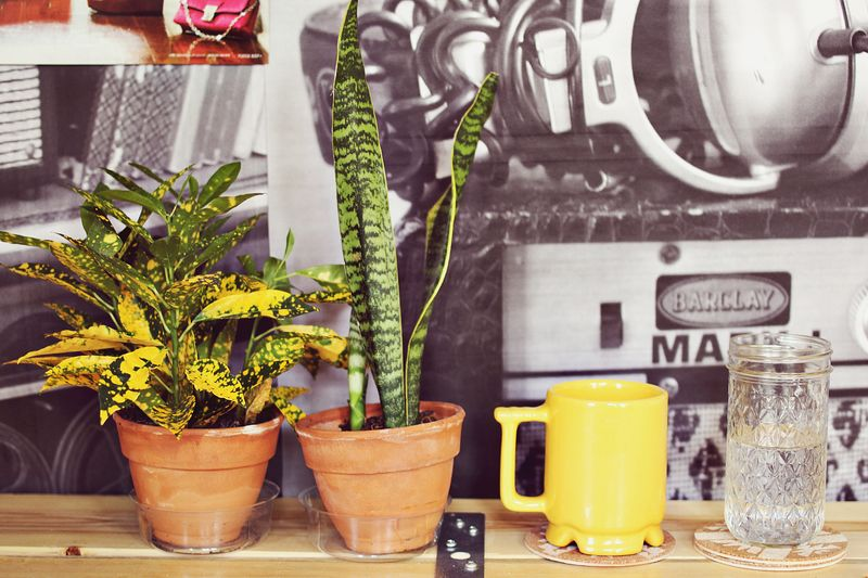 Plants & Coffee