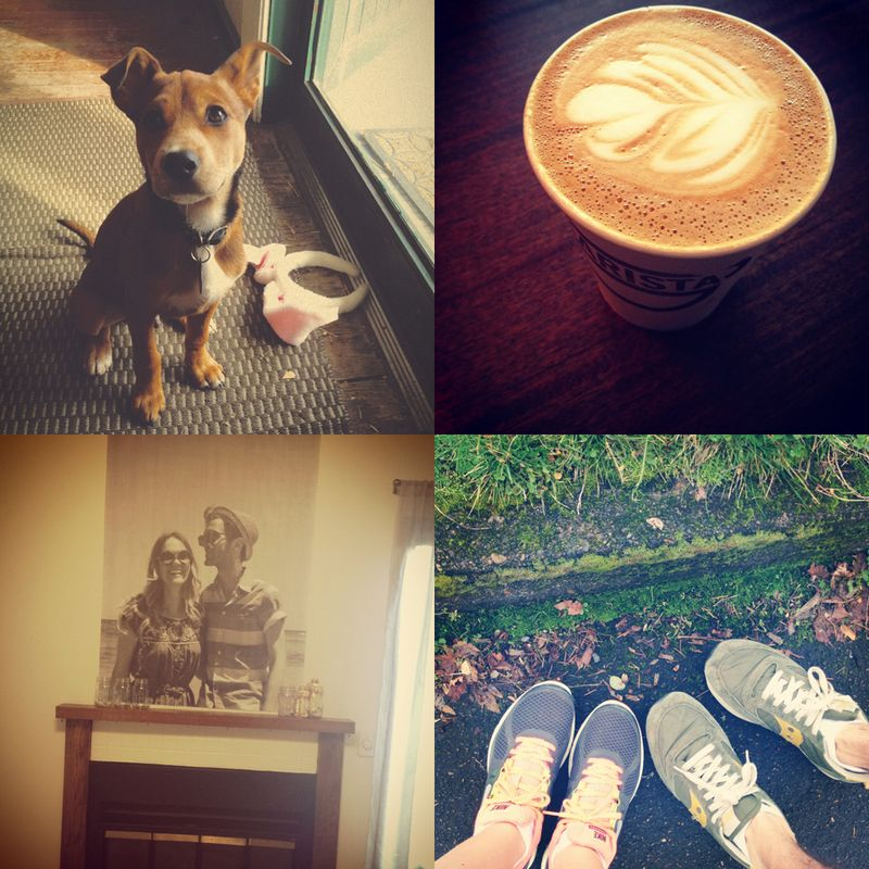 Puppy, latte crazy photo