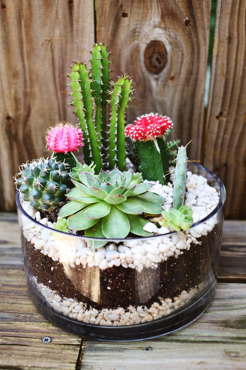 Planting A Simple Cacti Garden A Beautiful Mess - cactus garden plan