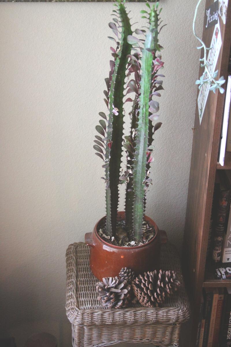 Great cacti!