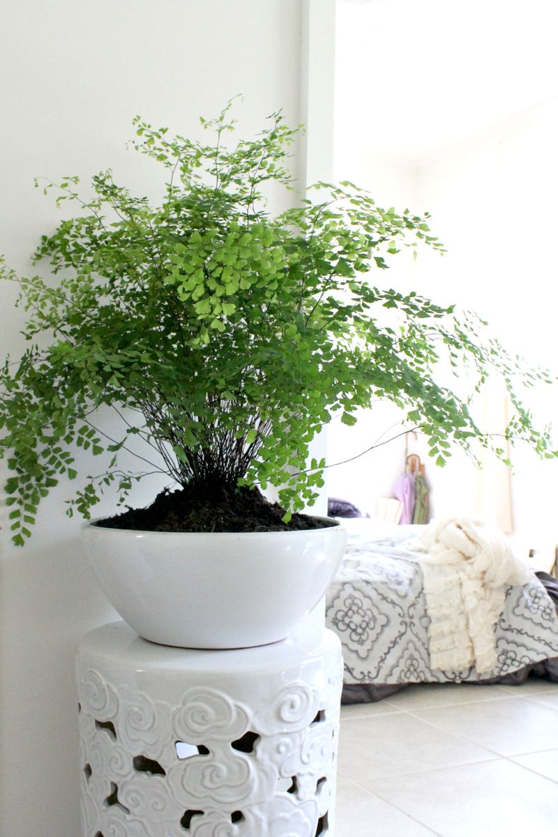 I need more house plants! Love this one and the stand!