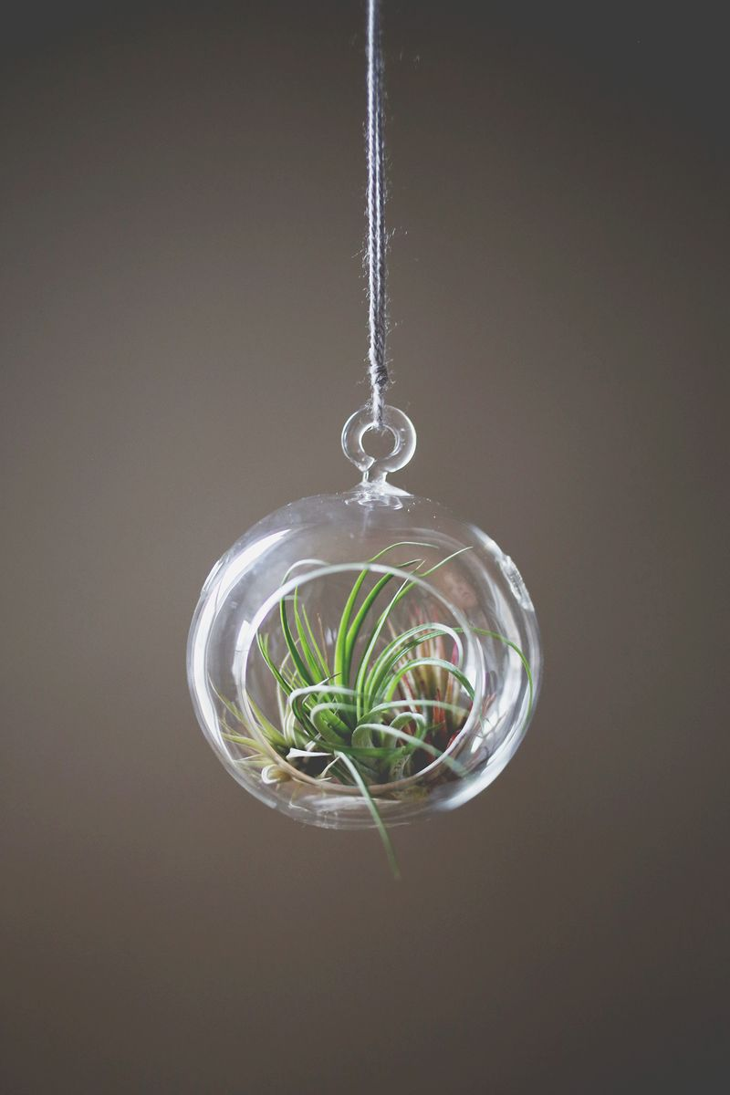 Amazing How To Care For Air Plants