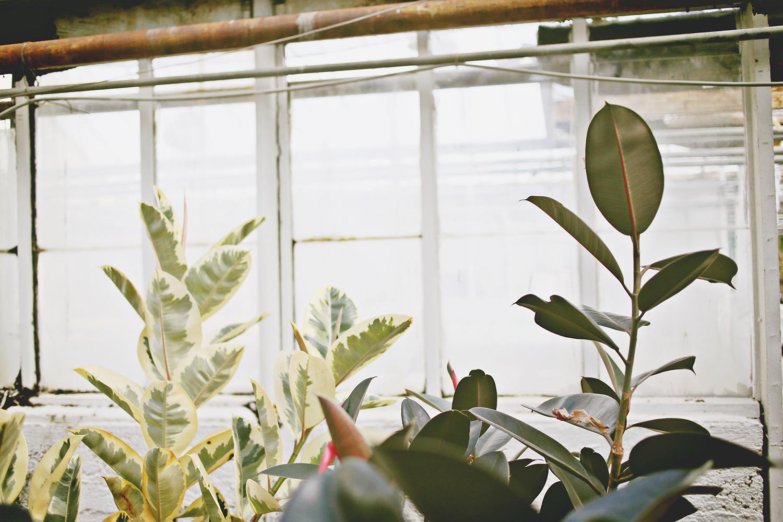 Plant Hunting