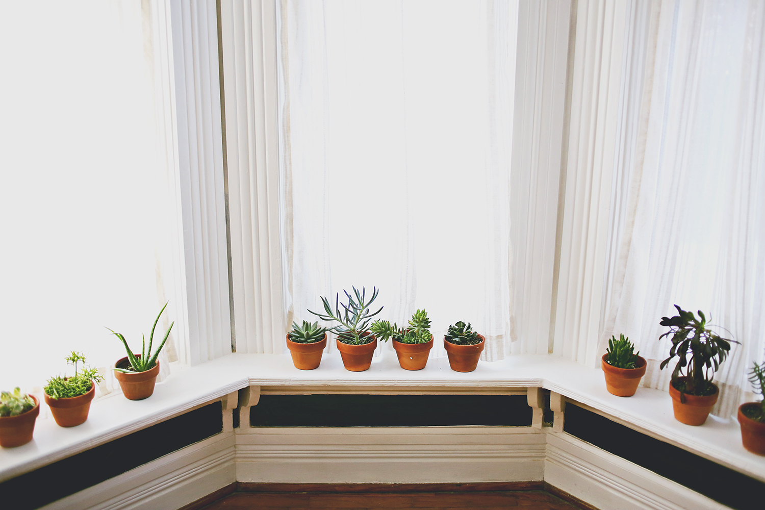 Plants in our new studio