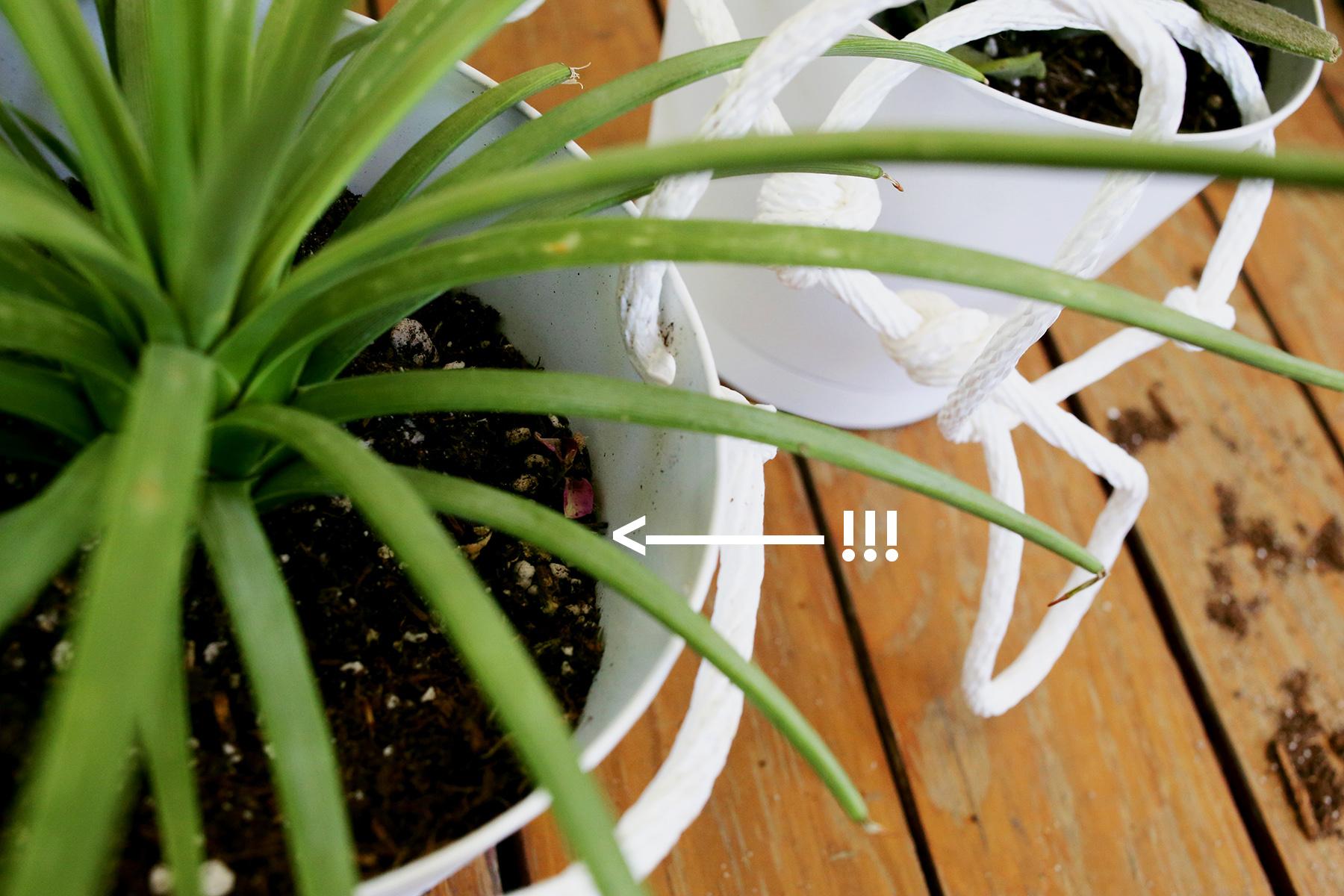 3 Tier Indoor Rope Planter :: be careful here