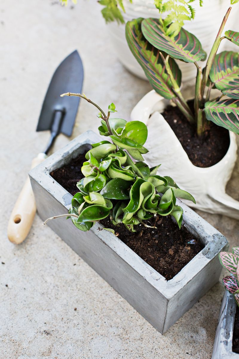 7 unique non toxic houseplants a beautiful mess. Black Bedroom Furniture Sets. Home Design Ideas