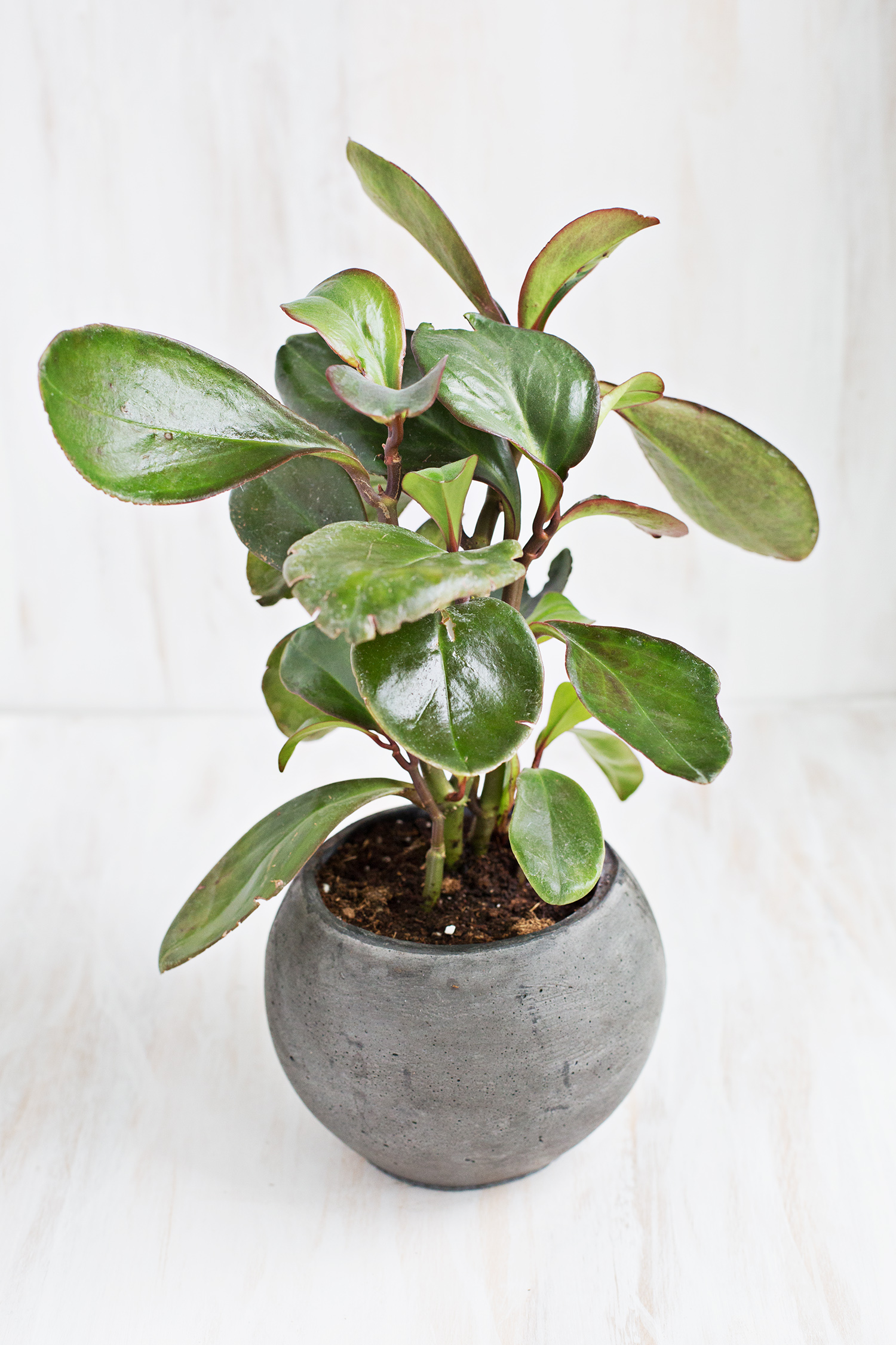 7 unique non toxic houseplants a beautiful mess