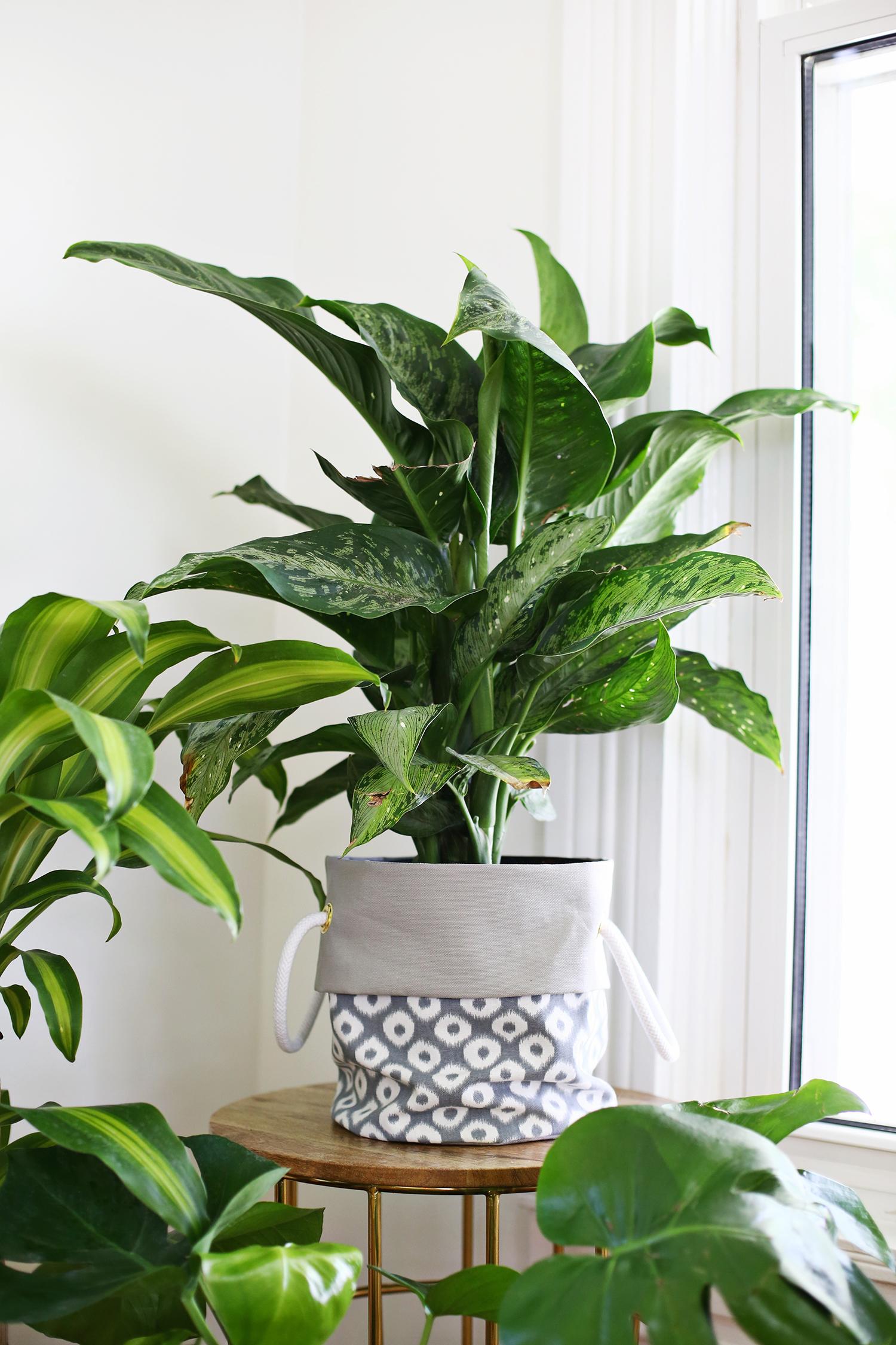 Fabric Planter DIY (click through for tutorial)