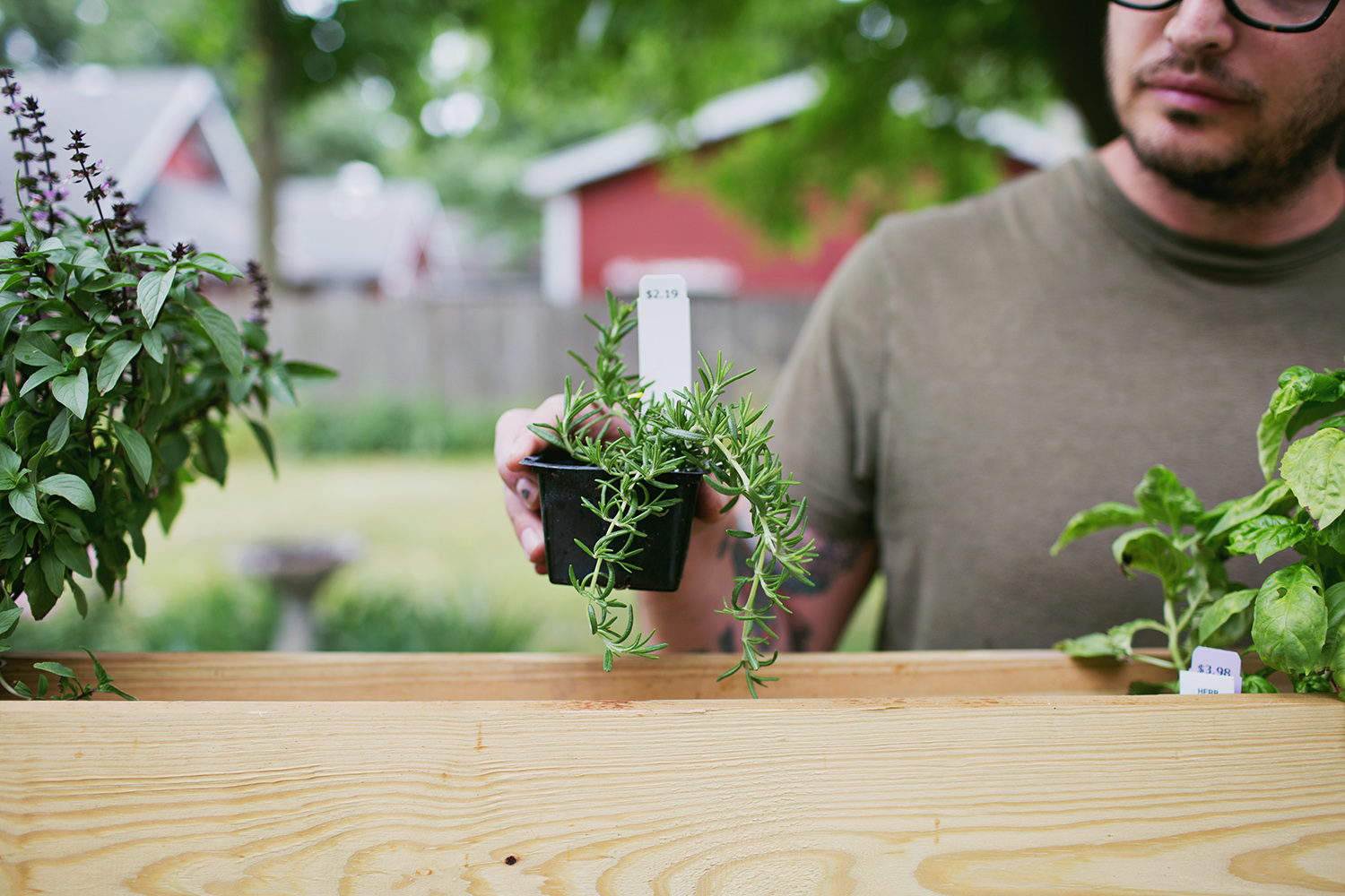 Build your own pergola - planting herbs (click for more)