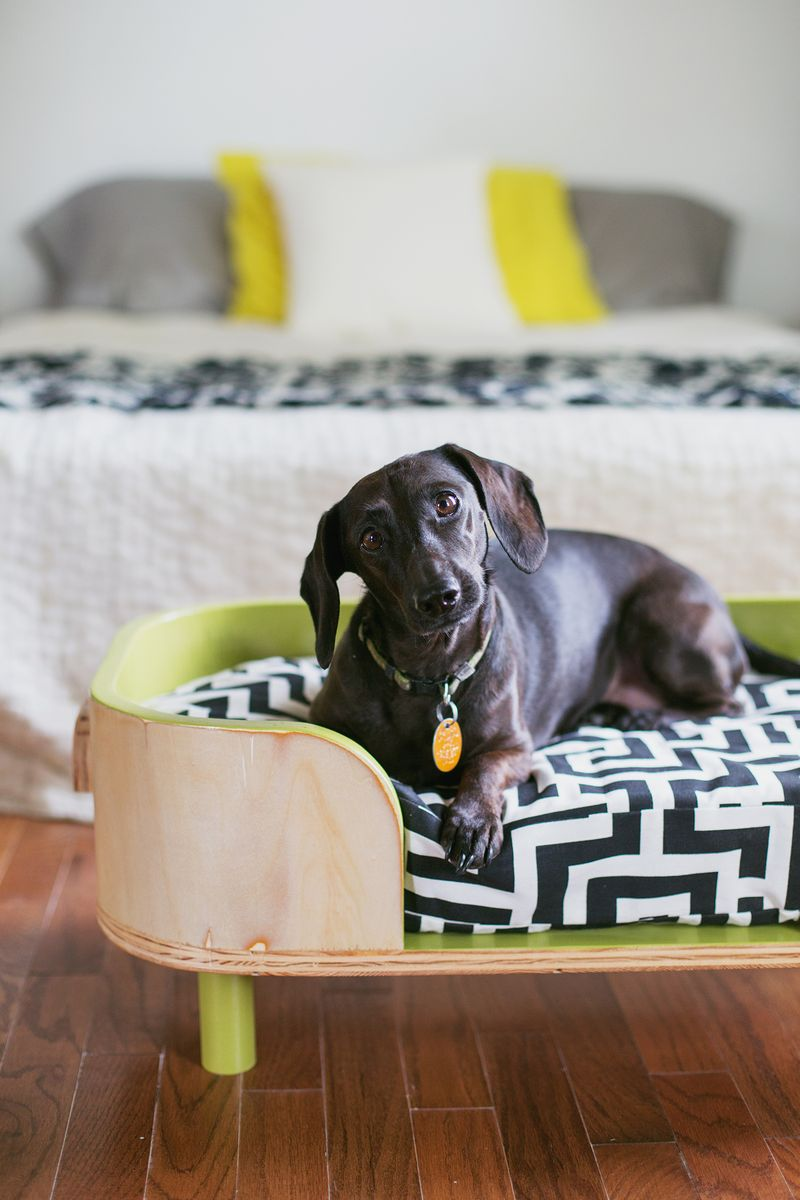 Beautiful The Sadie Bed (how To Make A Modern Pet Bed. Click For More) ...