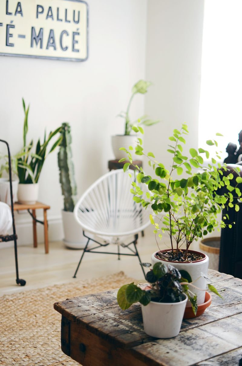Tips for keeping indoor plants alive a beautiful mess for Indoor plants living room ideas