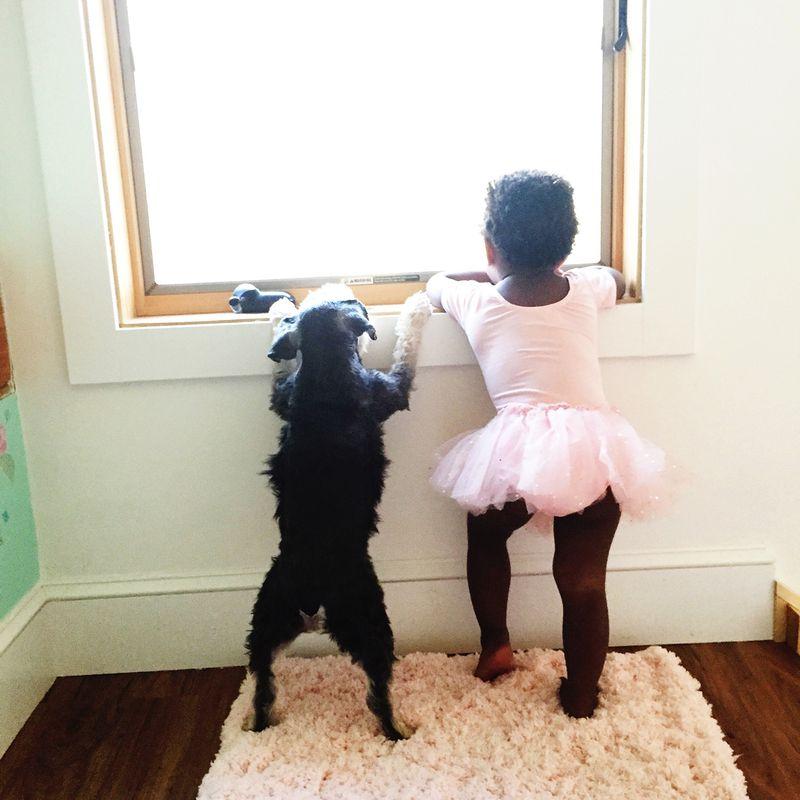 Tips for better pet photos!