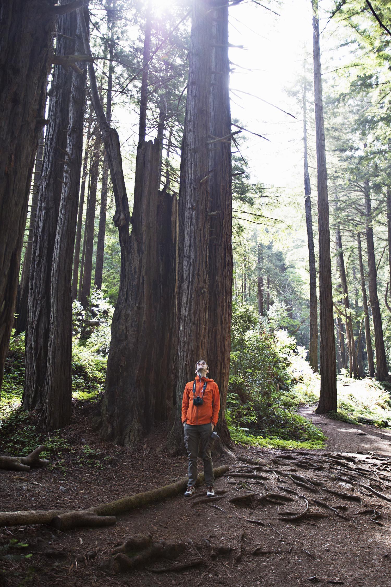 Redwood hiking in big sur