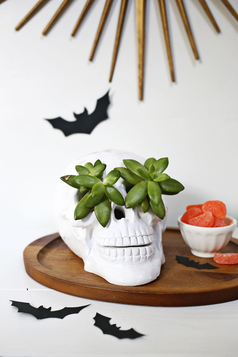 Succulent skull planter idea!