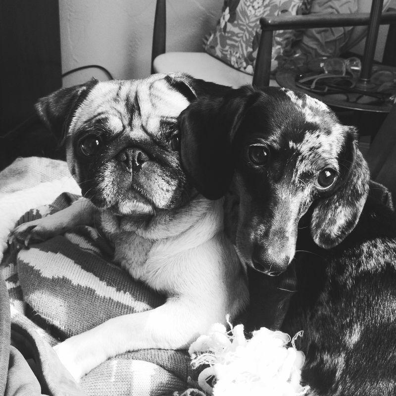 Dolly & Suki
