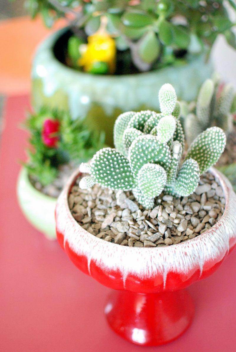 Cacti! At home with Kimi Encarnacion