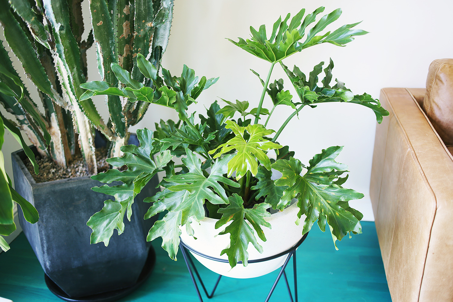 Five easy to care for houseplants a beautiful mess for Low water indoor plants