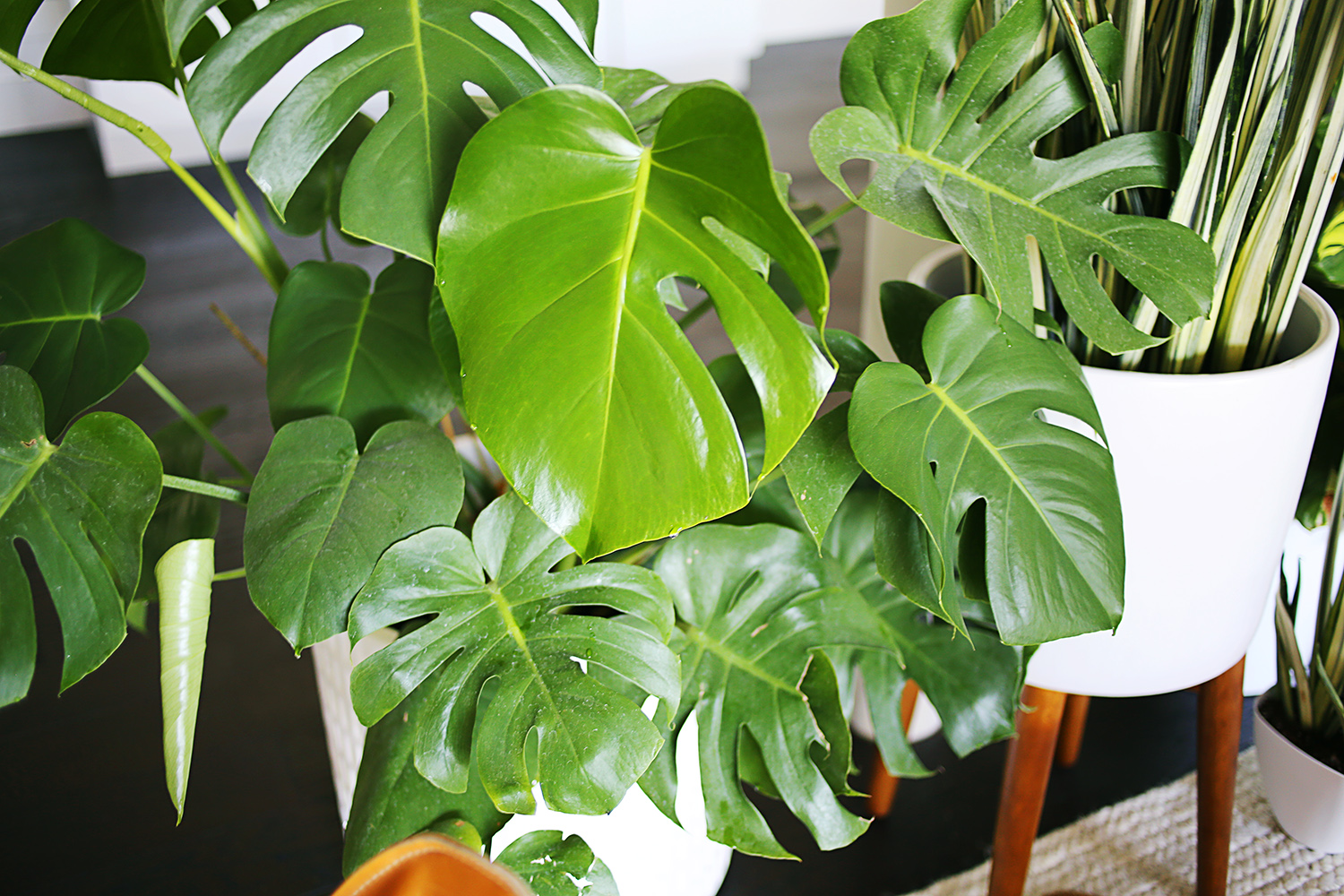 five easy to care for houseplants - House Plants