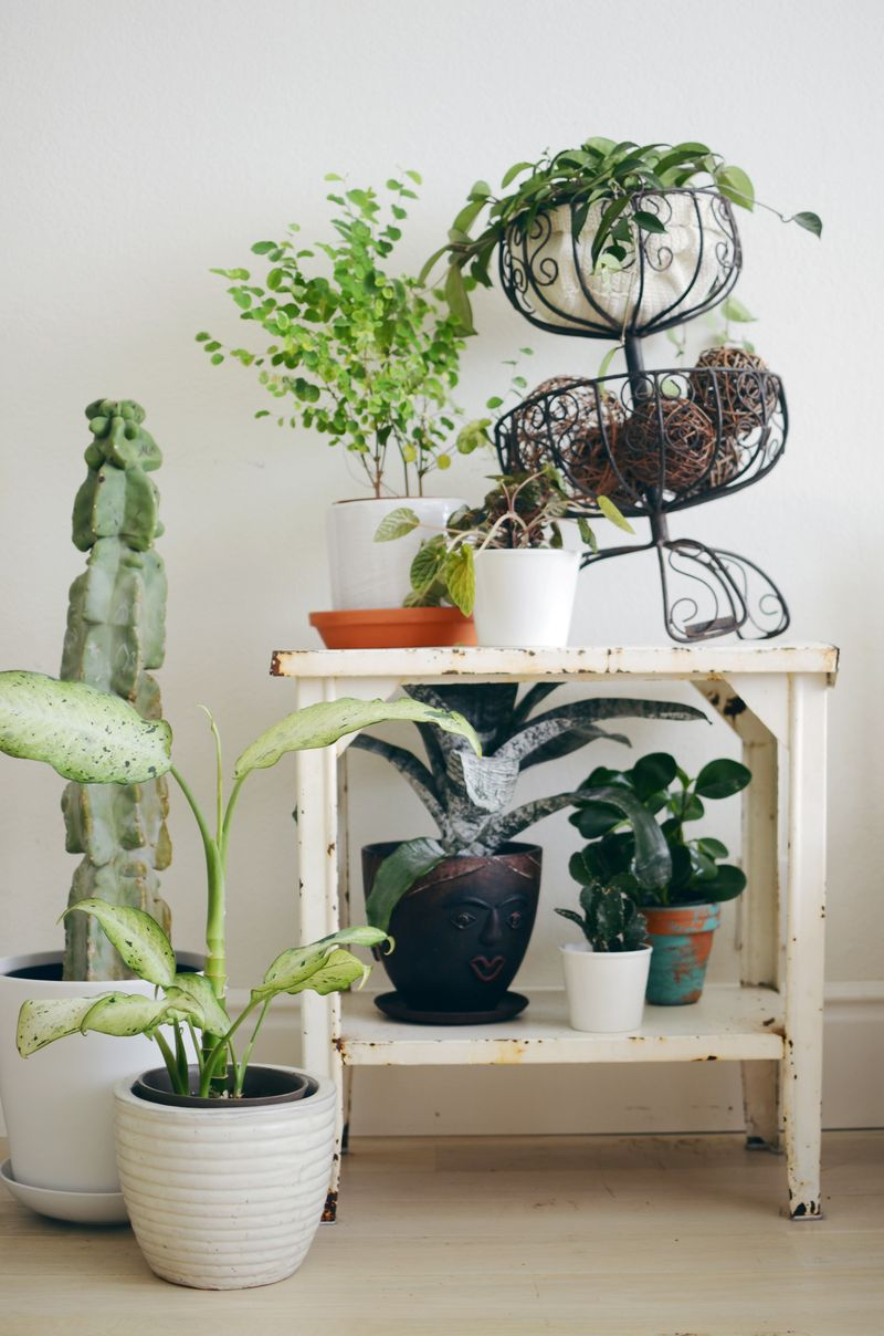 Tips for keeping indoor plants alive a beautiful mess Images of indoor plants