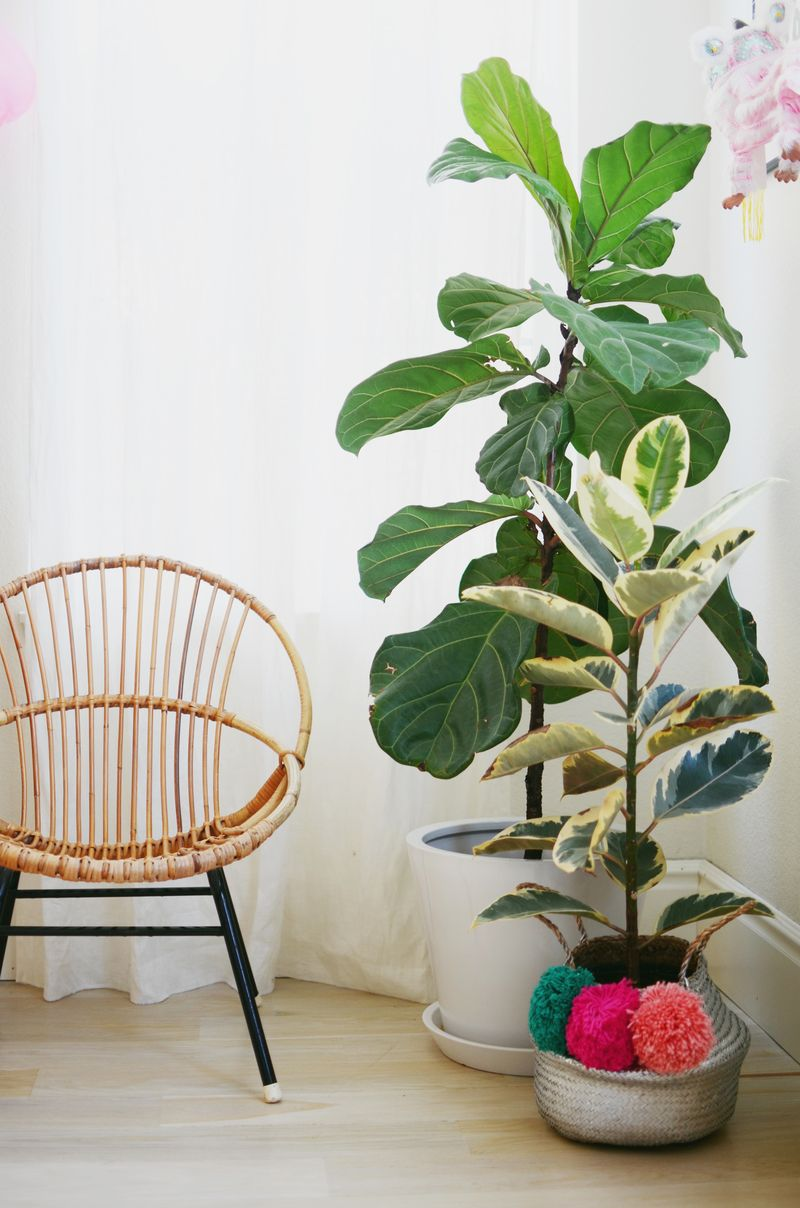 Tips for keeping indoor plants alive a beautiful mess - Pretty indoor plants ...