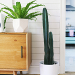 Five EASY-to-Care-for Houseplants