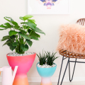 Make Your Own Gradient Planters  - February 20, 2017